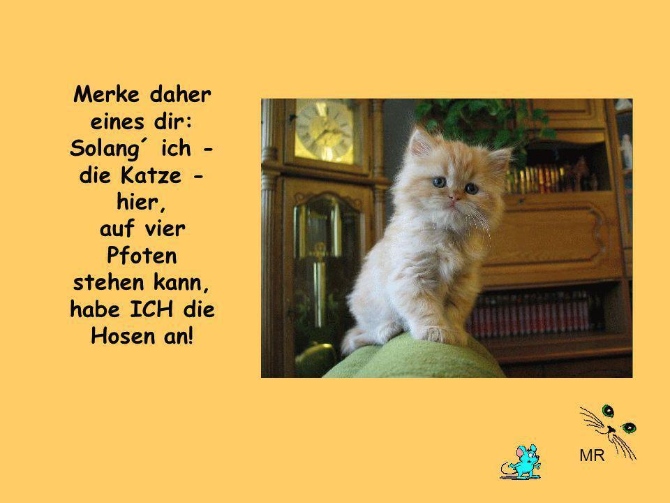 Merke daher eines dir: Solang´ ich - die Katze - hier, auf vier Pfoten stehen kann, habe ICH die Hosen an!