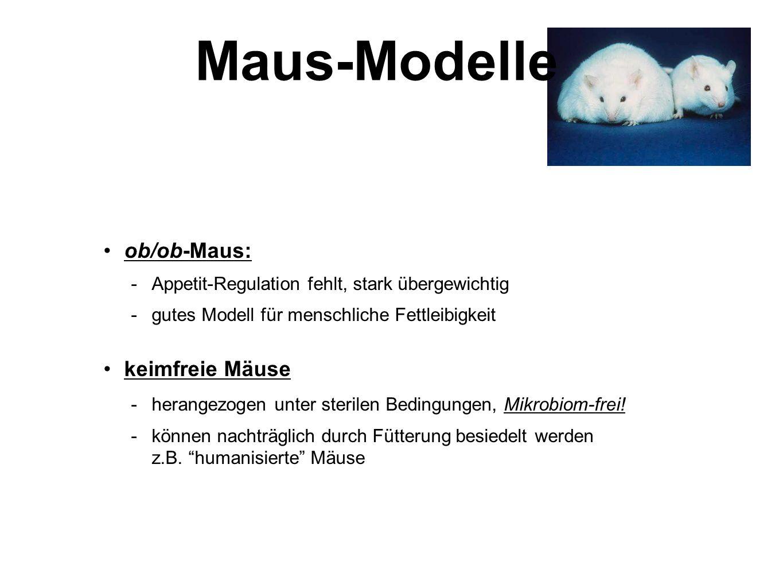 Maus-Modelle ob/ob-Maus: keimfreie Mäuse