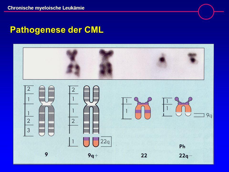 Pathogenese der CML
