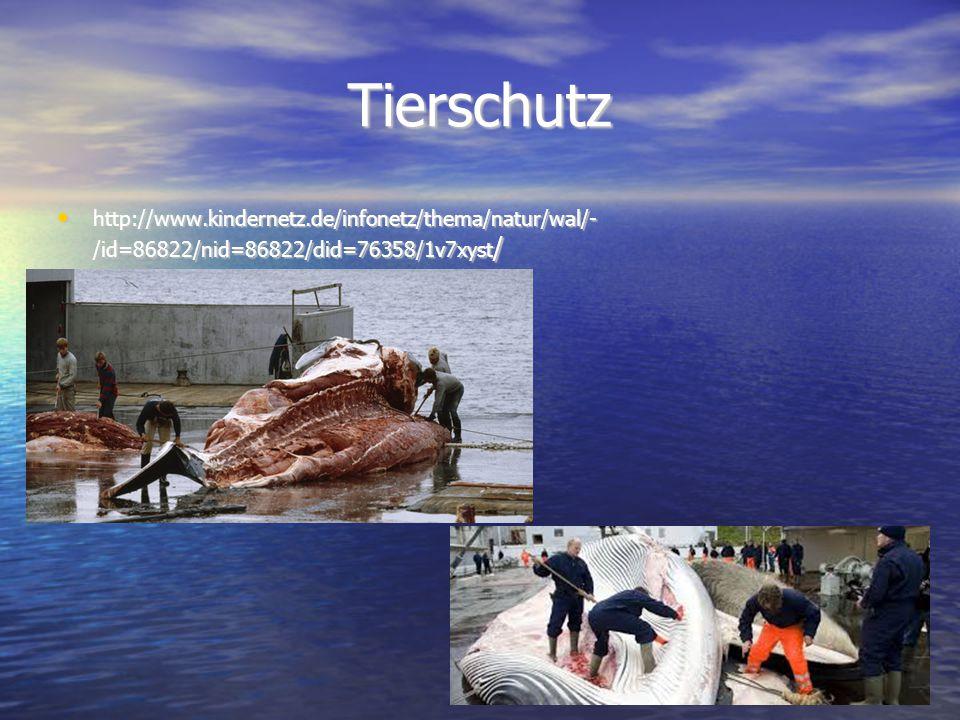 Tierschutz http://www.kindernetz.de/infonetz/thema/natur/wal/- /id=86822/nid=86822/did=76358/1v7xyst/