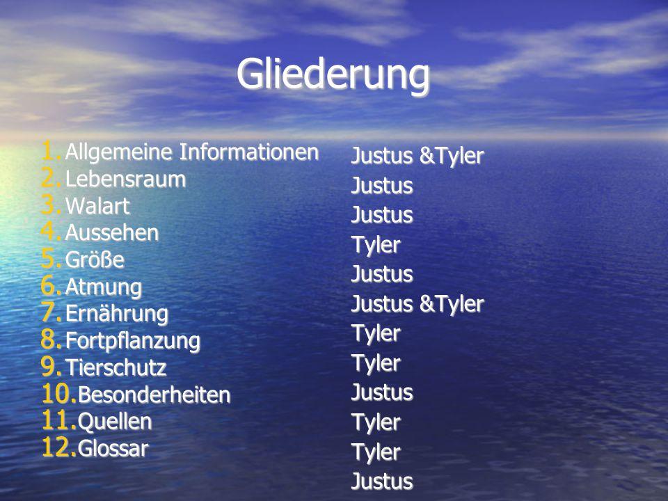 Gliederung Allgemeine Informationen Justus &Tyler Lebensraum Justus