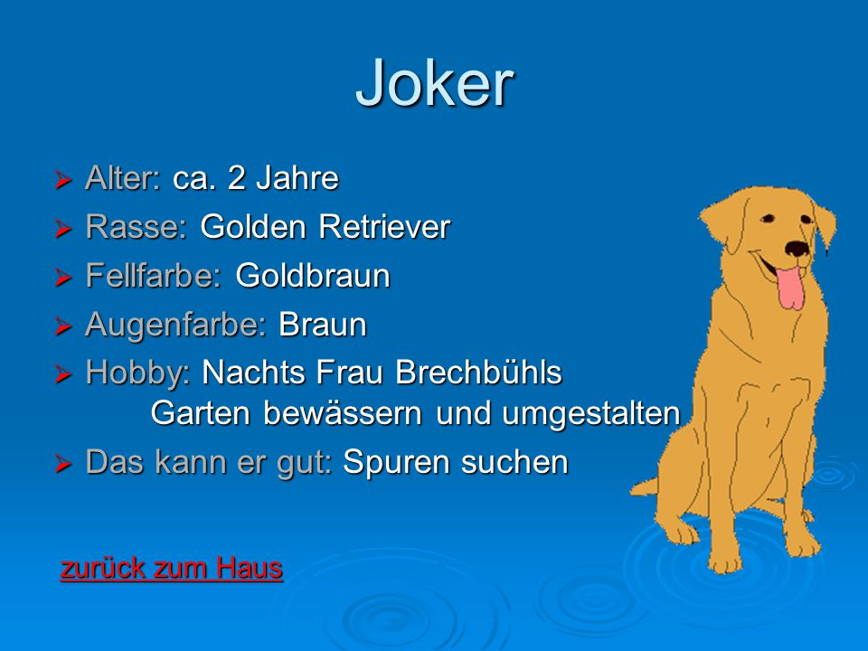Joker Alter: ca. 2 Jahre Rasse: Golden Retriever Fellfarbe: Goldbraun