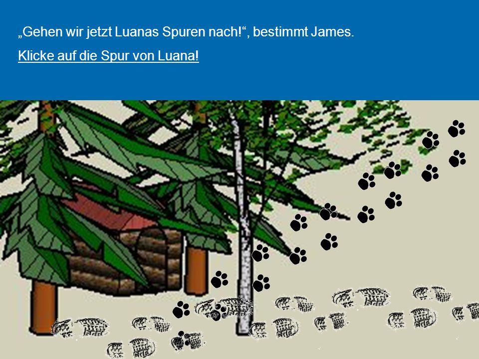 """""""Gehen wir jetzt Luanas Spuren nach! , bestimmt James."""
