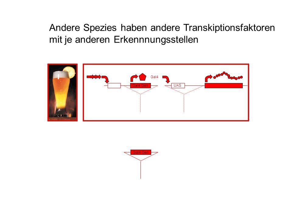 Andere Spezies haben andere Transkiptionsfaktoren mit je anderen Erkennnungsstellen