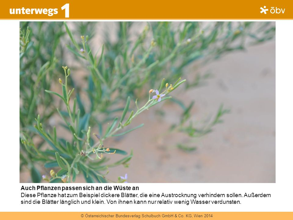 Auch Pflanzen passen sich an die Wüste an