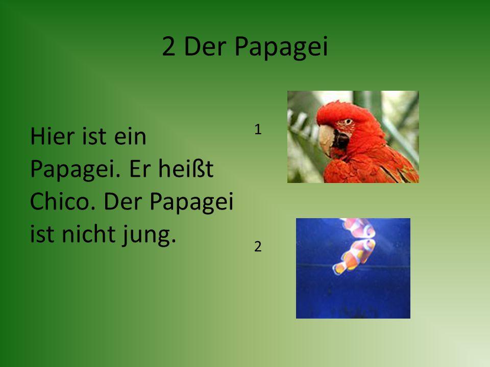 2 Der Papagei Hier ist ein Papagei. Er heißt Chico. Der Papagei ist nicht jung. 1 2
