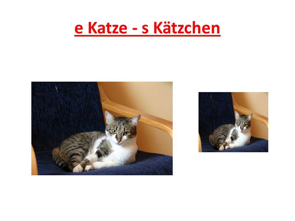 e Katze - s Kätzchen