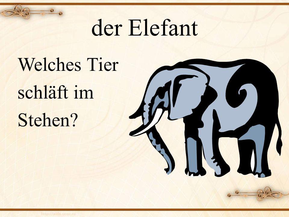 der Elefant Welches Tier schläft im Stehen
