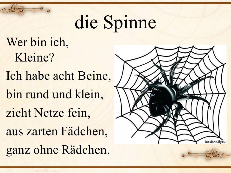 die Spinne Wer bin ich, Kleine Ich habe acht Beine,