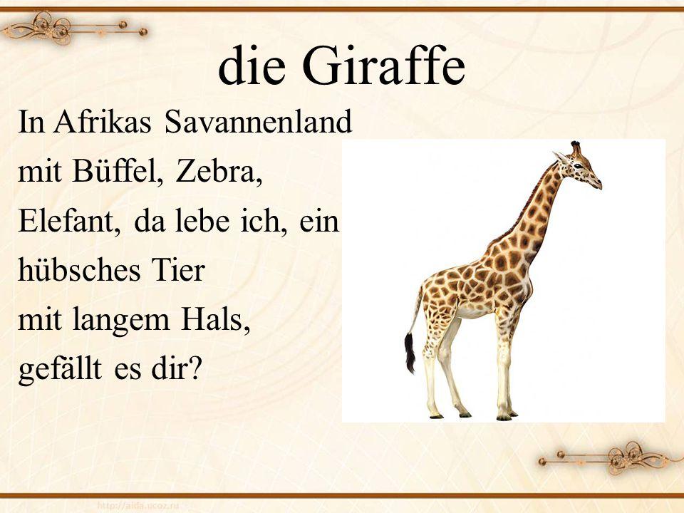 die Giraffe In Afrikas Savannenland mit Büffel, Zebra, Elefant, da lebe ich, ein hübsches Tier mit langem Hals, gefällt es dir.