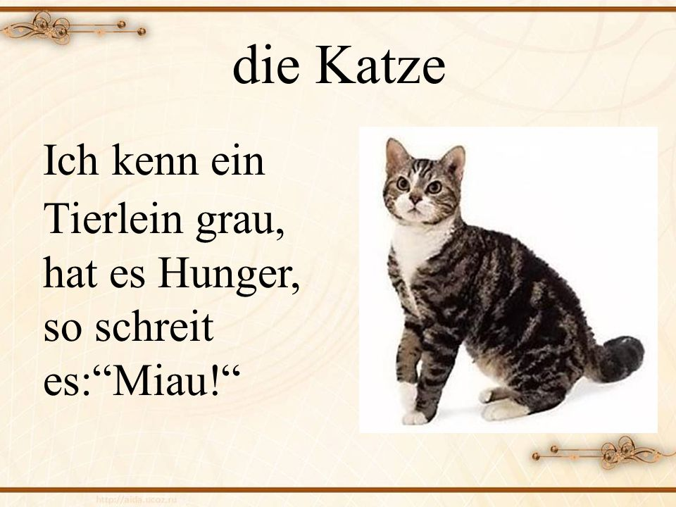 die Katze Ich kenn ein Tierlein grau, hat es Hunger, so schreit es: Miau!