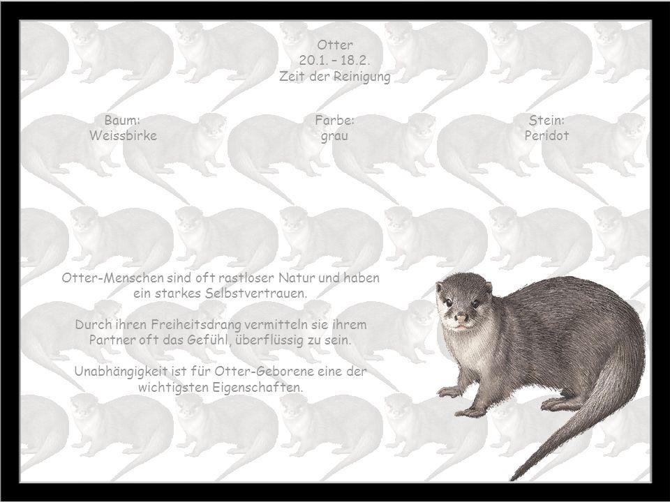 Otter 20.1. – 18.2. Zeit der Reinigung. Baum: Weissbirke. Farbe: grau. Stein: Peridot.