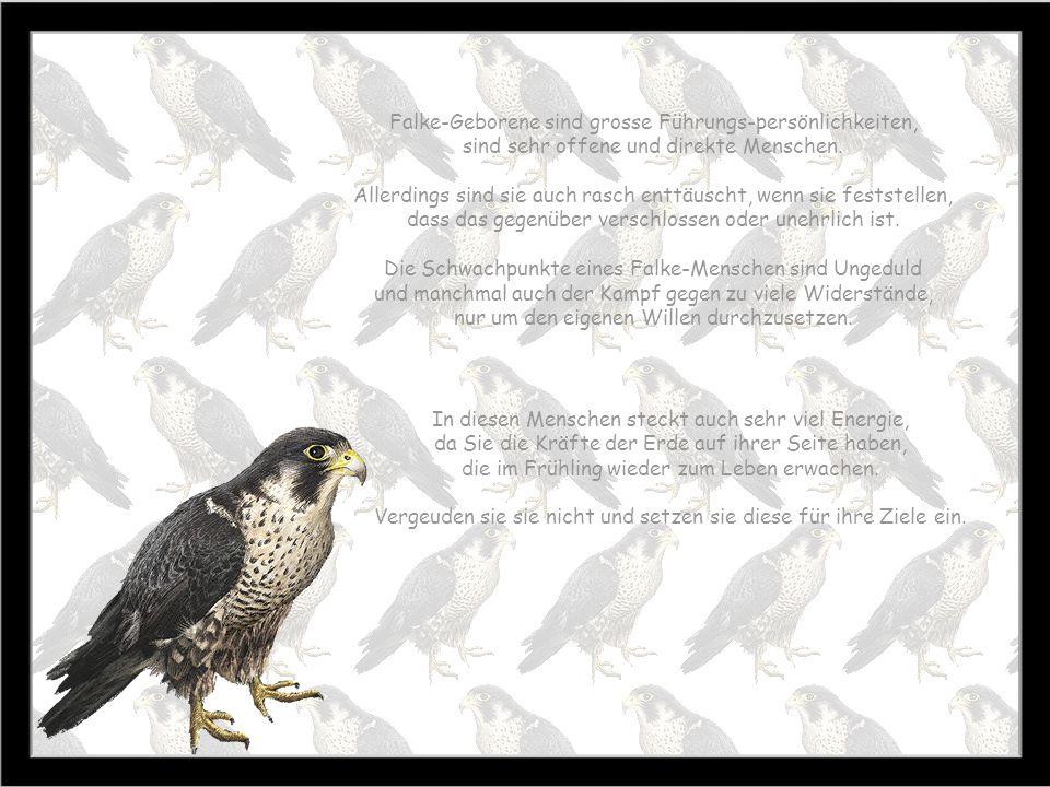 Falke-Geborene sind grosse Führungs-persönlichkeiten,