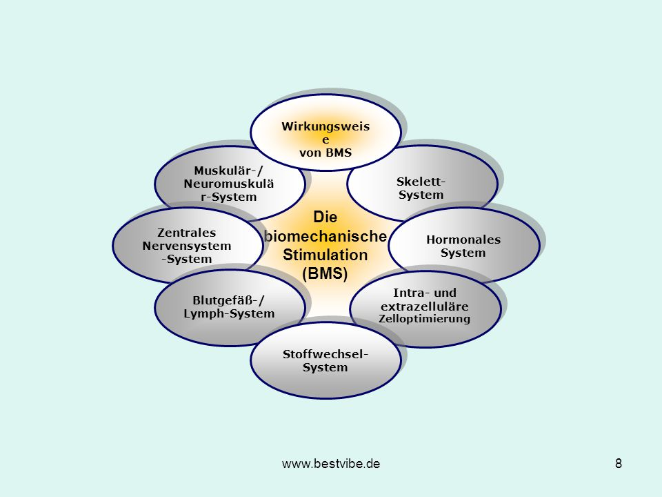 Die biomechanische Stimulation (BMS)