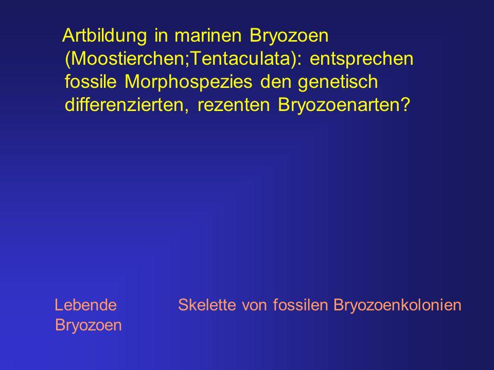 Artbildung in marinen Bryozoen (Moostierchen;Tentaculata): entsprechen fossile Morphospezies den genetisch differenzierten, rezenten Bryozoenarten