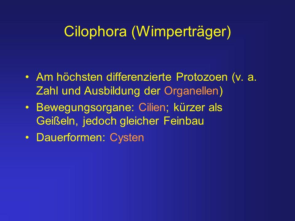 Cilophora (Wimperträger)