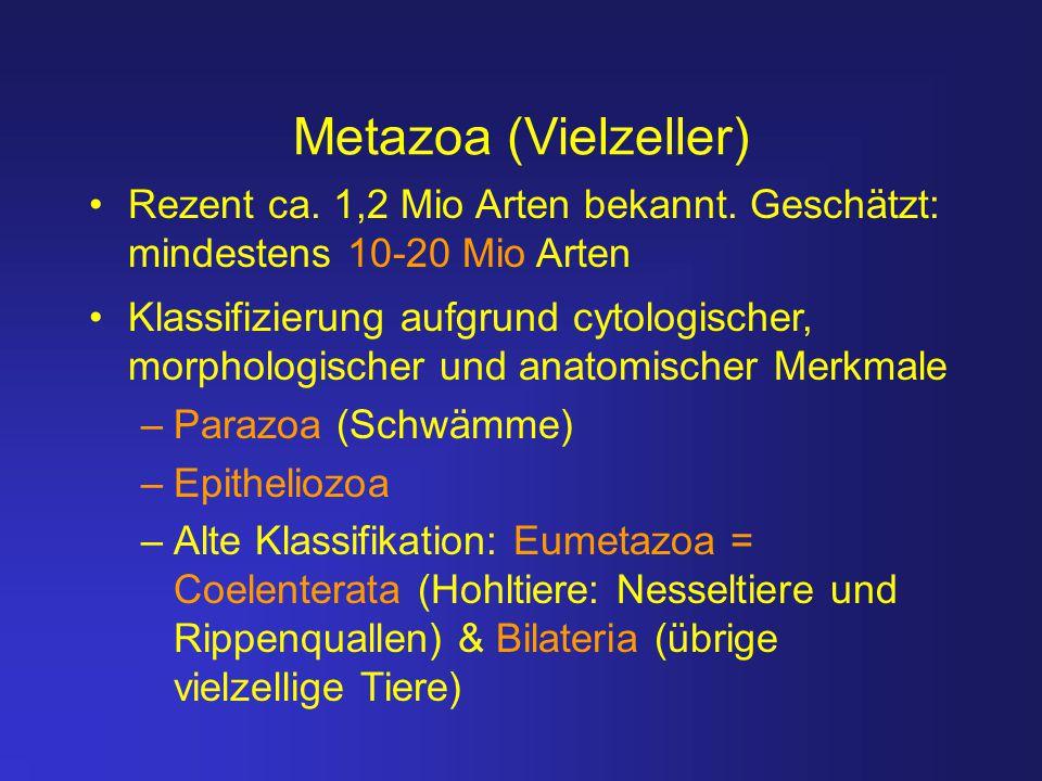 Metazoa (Vielzeller) Rezent ca. 1,2 Mio Arten bekannt. Geschätzt: mindestens 10-20 Mio Arten.