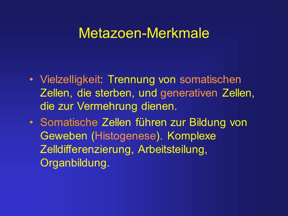 Metazoen-Merkmale Vielzelligkeit: Trennung von somatischen Zellen, die sterben, und generativen Zellen, die zur Vermehrung dienen.