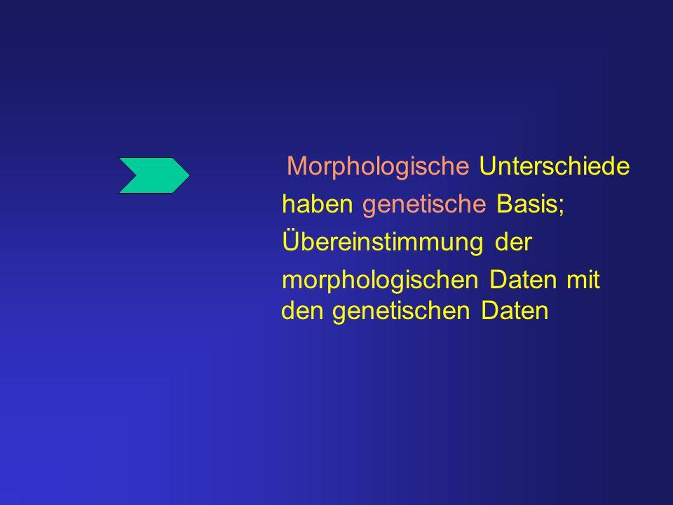 Morphologische Unterschiede