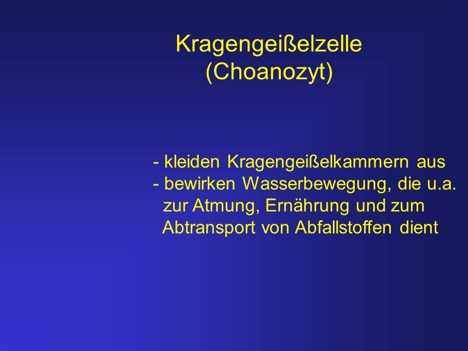 Kragengeißelzelle (Choanozyt)