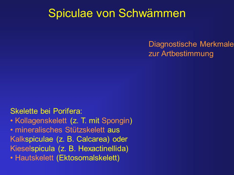 Spiculae von Schwämmen