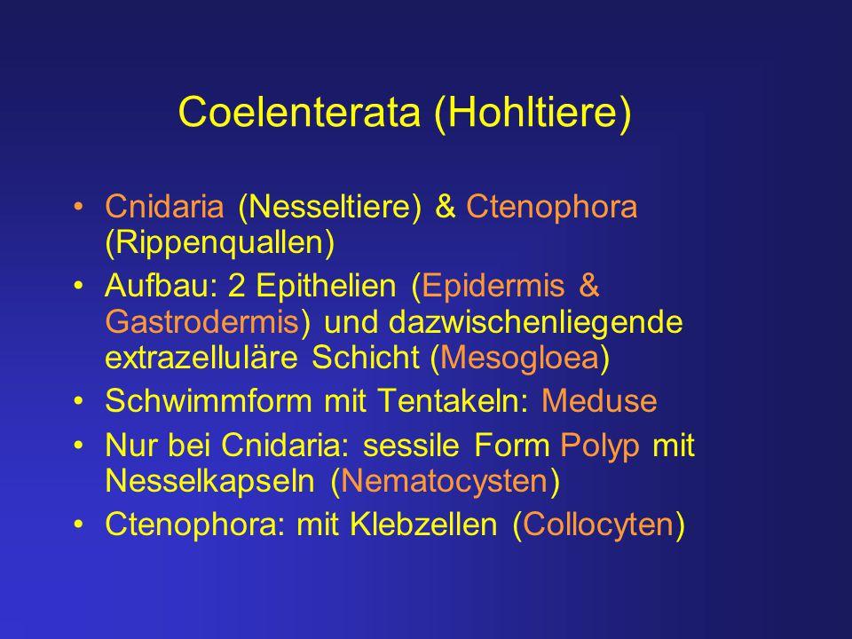 Coelenterata (Hohltiere)