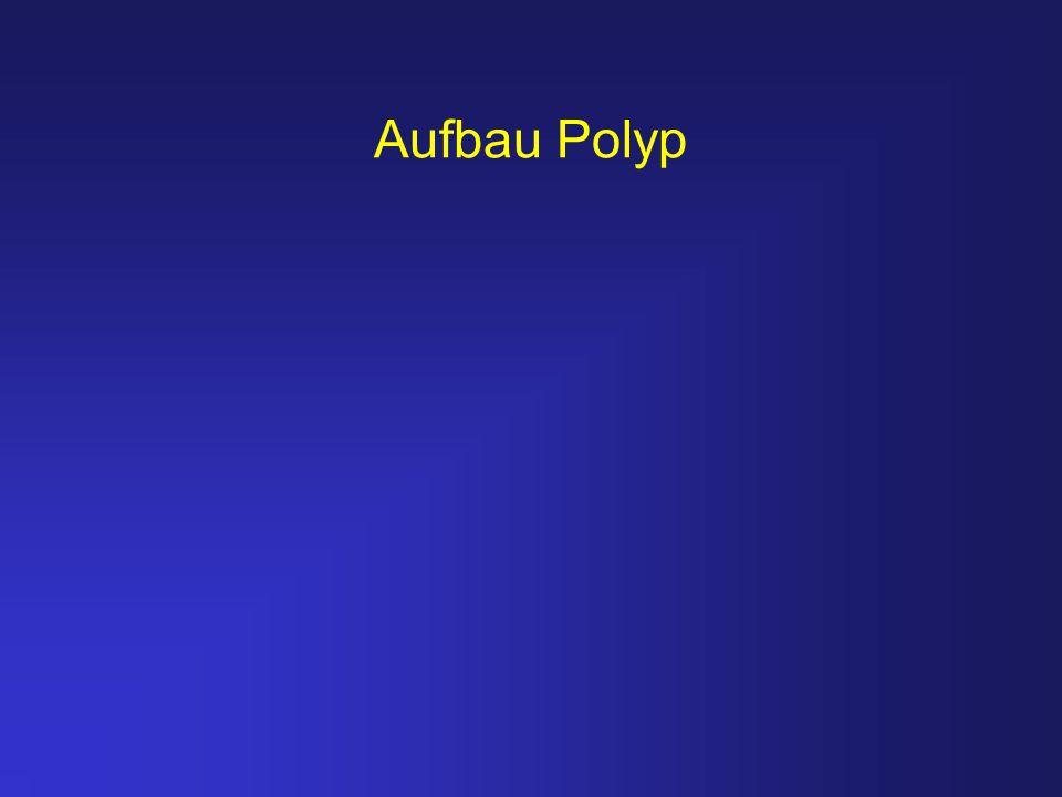 Aufbau Polyp