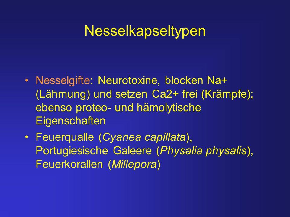 Nesselkapseltypen Nesselgifte: Neurotoxine, blocken Na+ (Lähmung) und setzen Ca2+ frei (Krämpfe); ebenso proteo- und hämolytische Eigenschaften.
