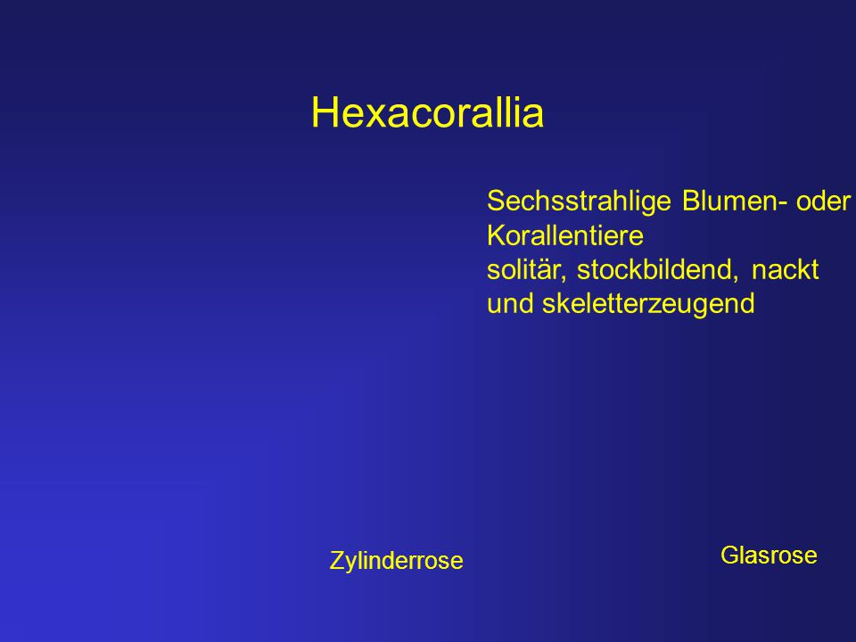 Hexacorallia Sechsstrahlige Blumen- oder Korallentiere