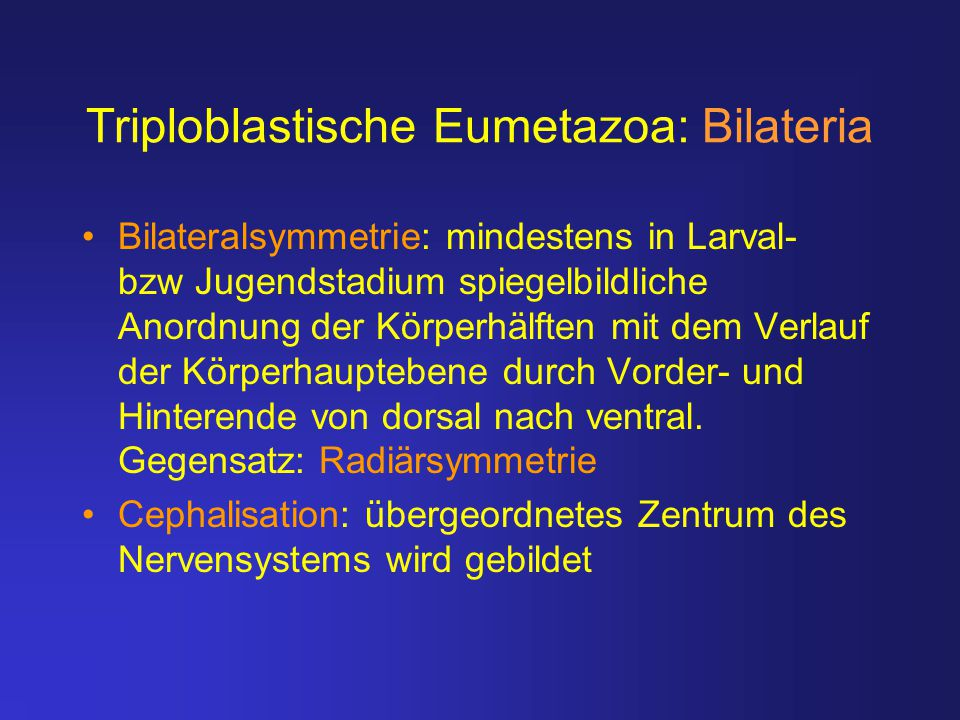 Triploblastische Eumetazoa: Bilateria