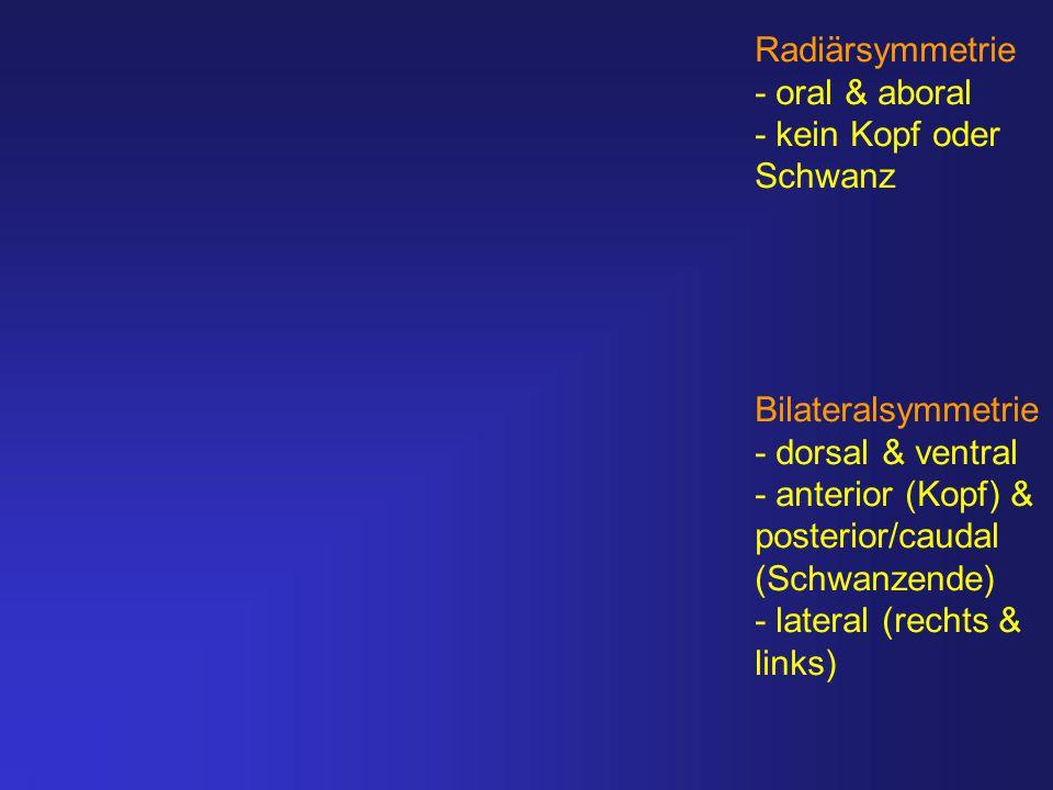 Radiärsymmetrie - oral & aboral. - kein Kopf oder. Schwanz. Bilateralsymmetrie. - dorsal & ventral.