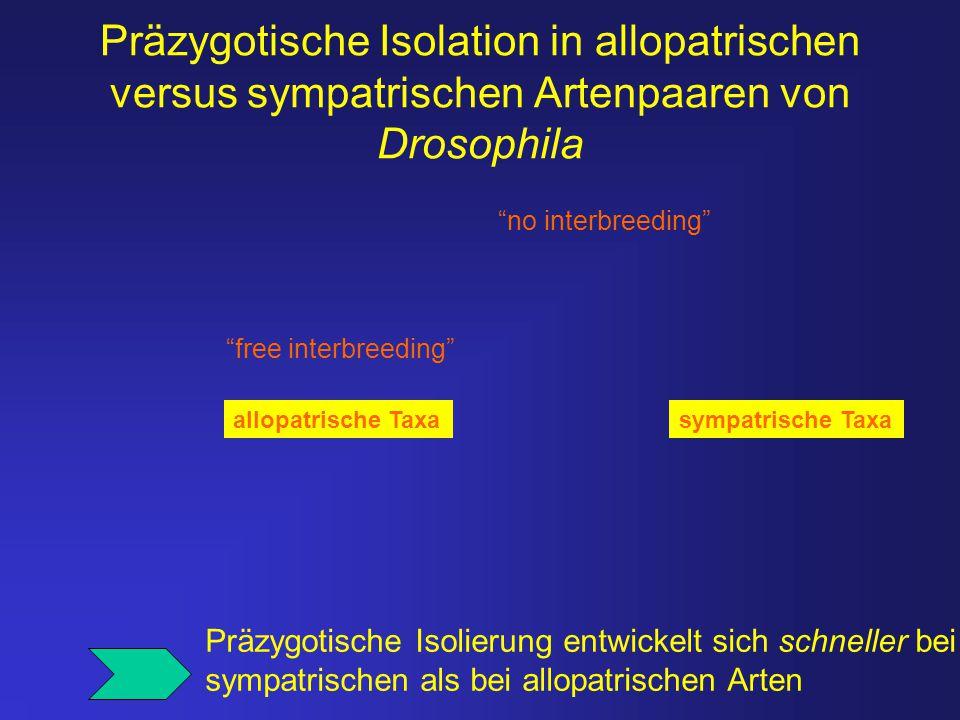 Präzygotische Isolation in allopatrischen versus sympatrischen Artenpaaren von Drosophila