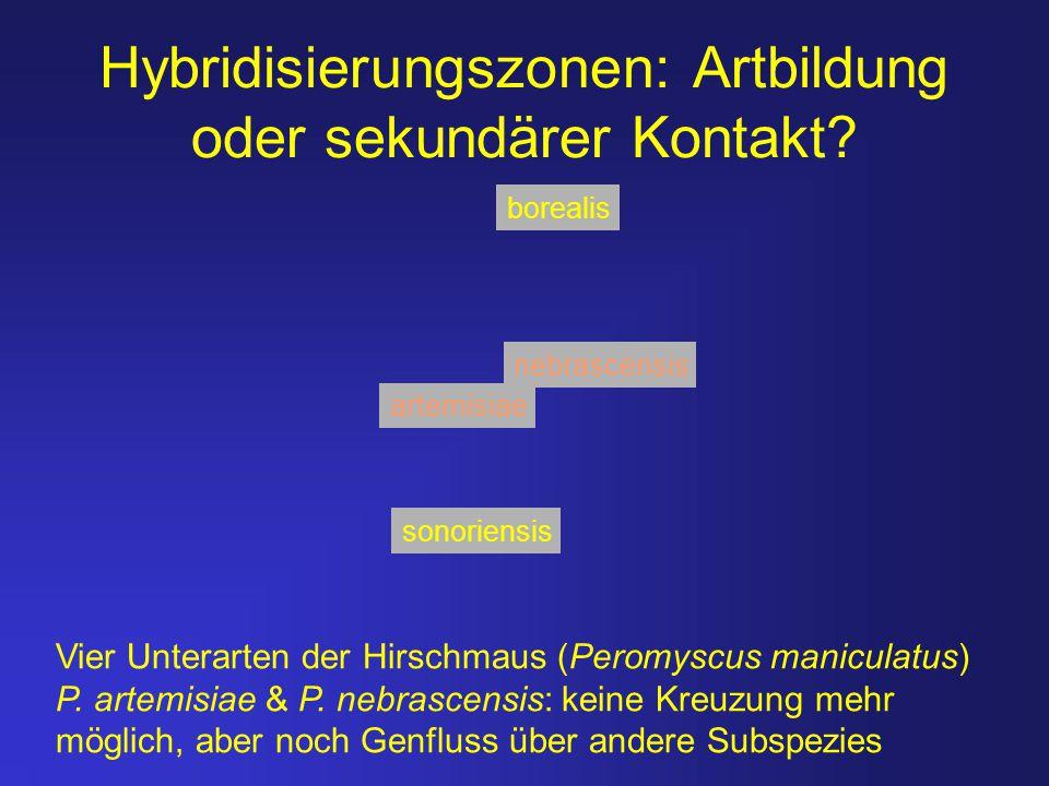 Hybridisierungszonen: Artbildung oder sekundärer Kontakt
