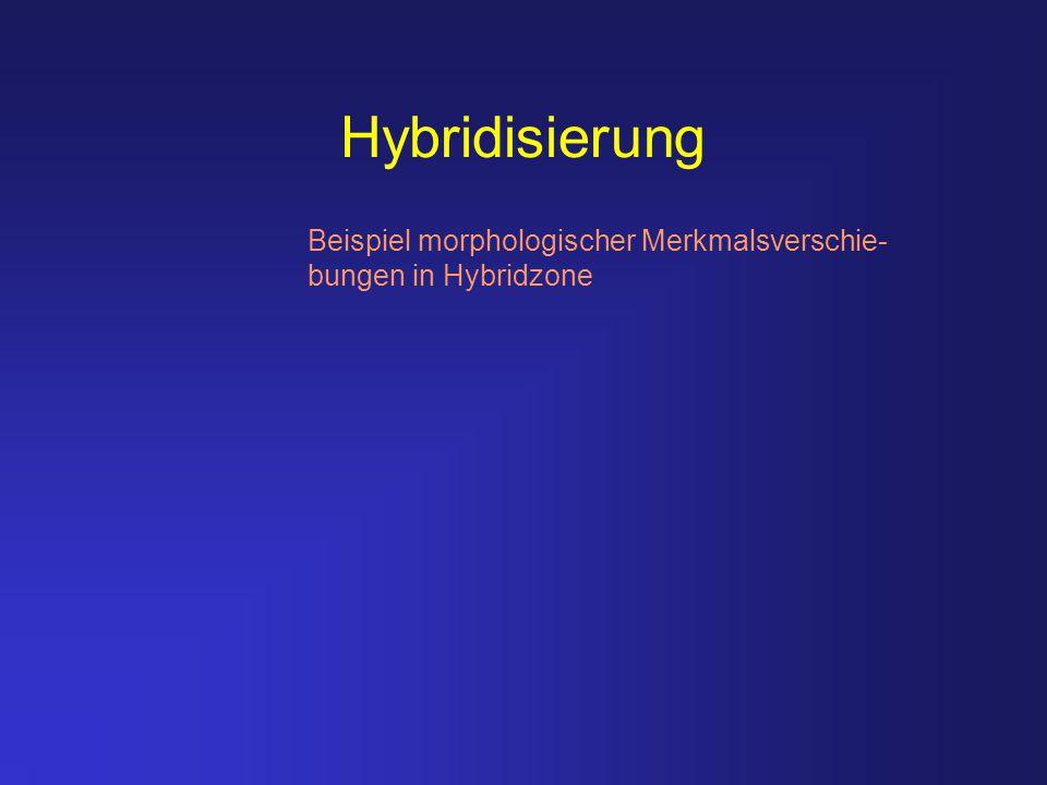 Hybridisierung Beispiel morphologischer Merkmalsverschie-