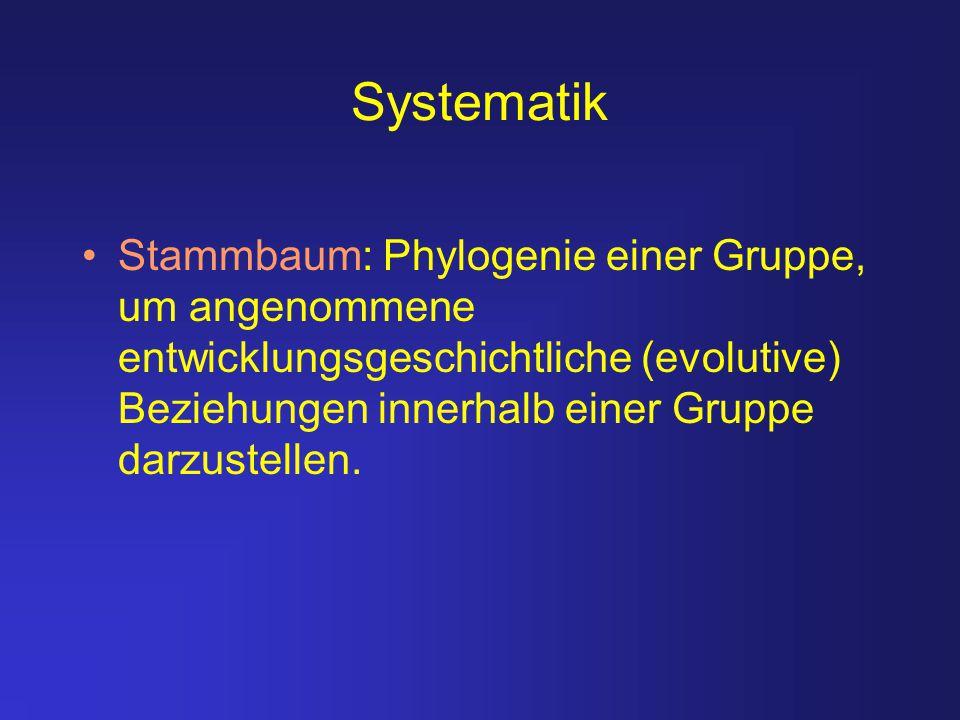 Systematik Stammbaum: Phylogenie einer Gruppe, um angenommene entwicklungsgeschichtliche (evolutive) Beziehungen innerhalb einer Gruppe darzustellen.