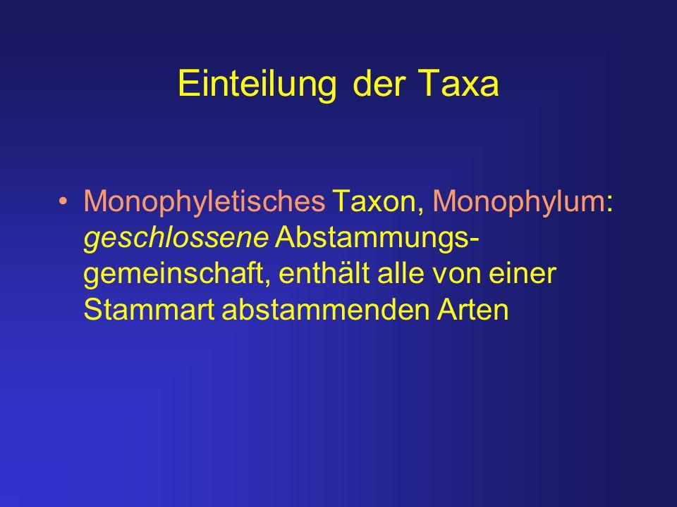 Einteilung der Taxa Monophyletisches Taxon, Monophylum: geschlossene Abstammungs-gemeinschaft, enthält alle von einer Stammart abstammenden Arten.