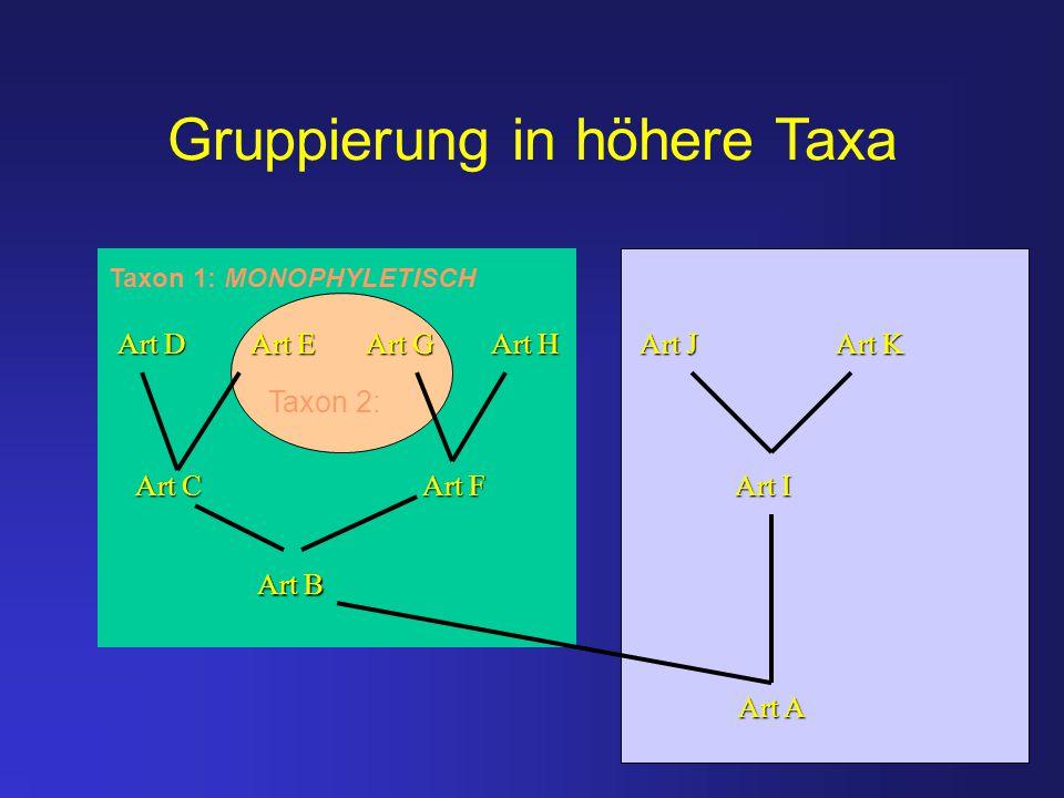 Gruppierung in höhere Taxa