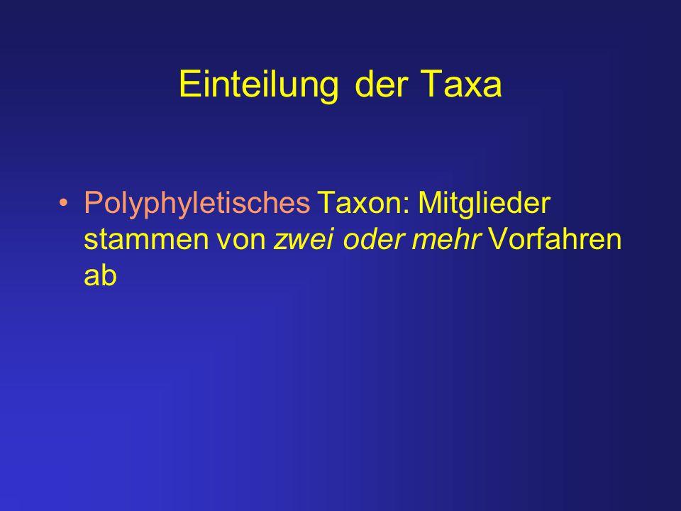 Einteilung der Taxa Polyphyletisches Taxon: Mitglieder stammen von zwei oder mehr Vorfahren ab