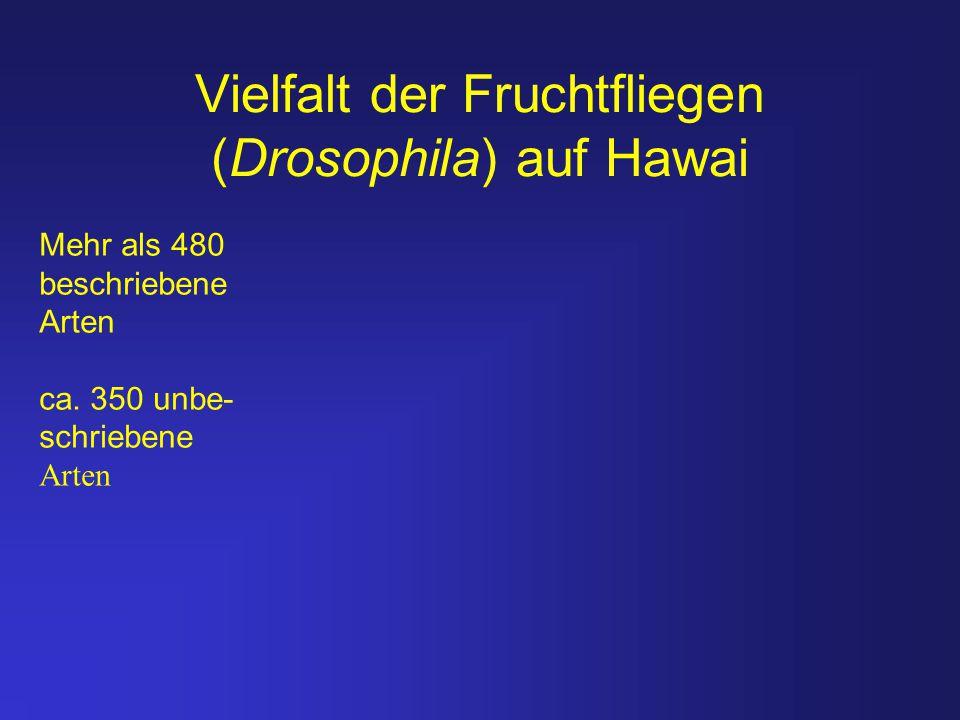 Vielfalt der Fruchtfliegen (Drosophila) auf Hawai