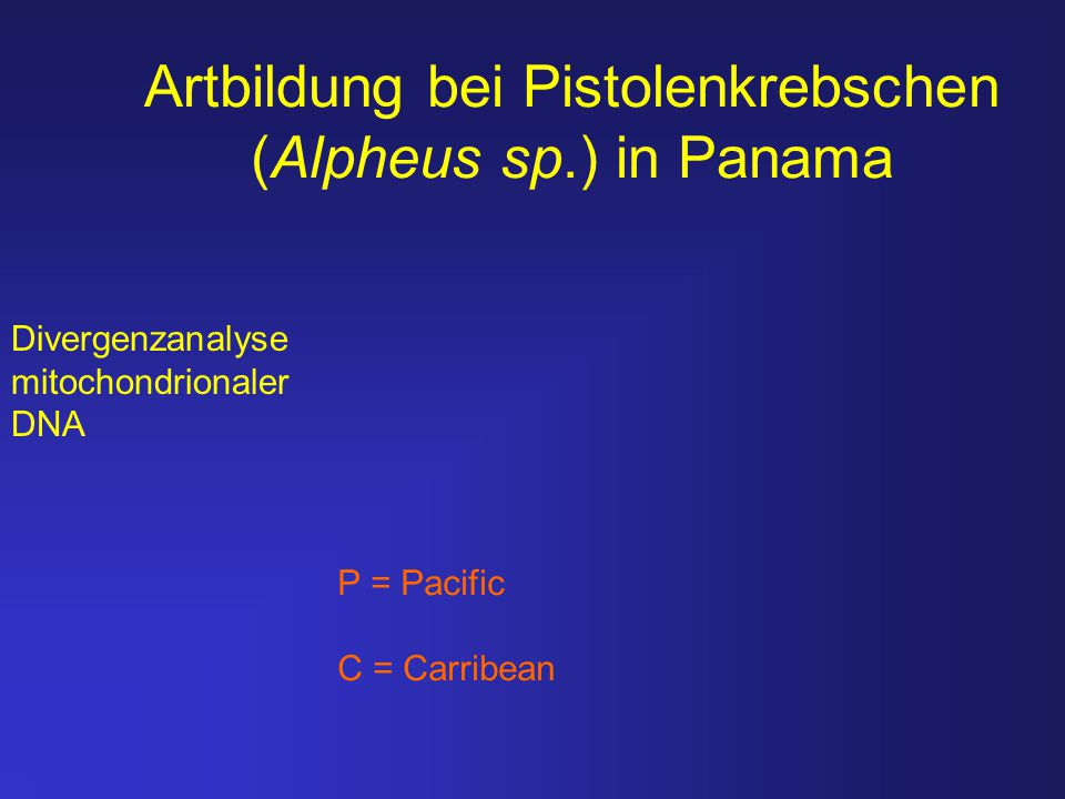 Artbildung bei Pistolenkrebschen (Alpheus sp.) in Panama