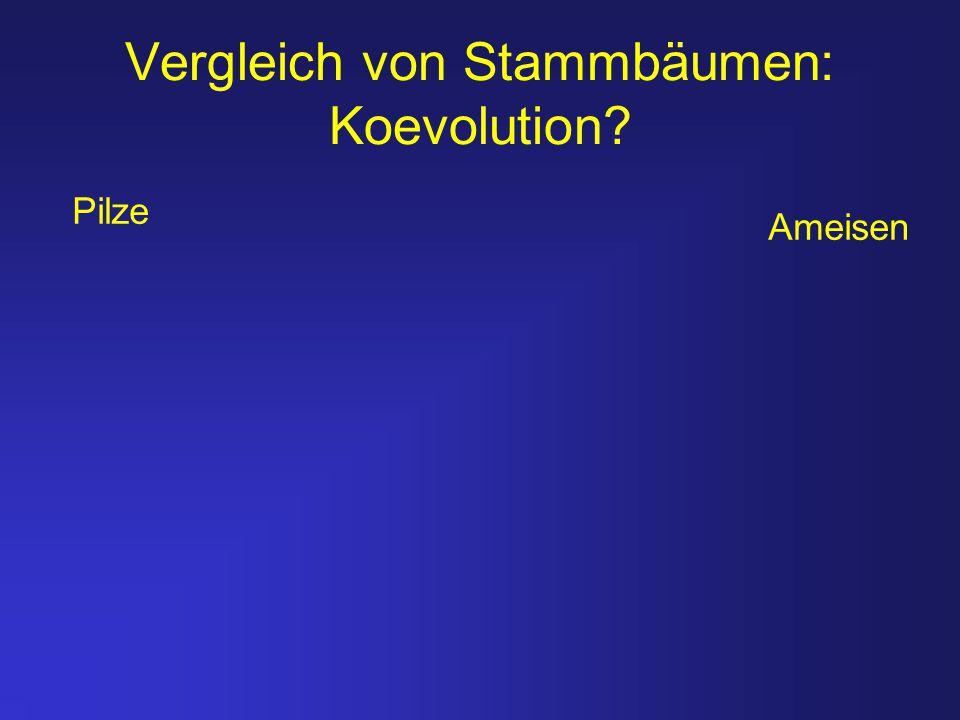Vergleich von Stammbäumen: Koevolution