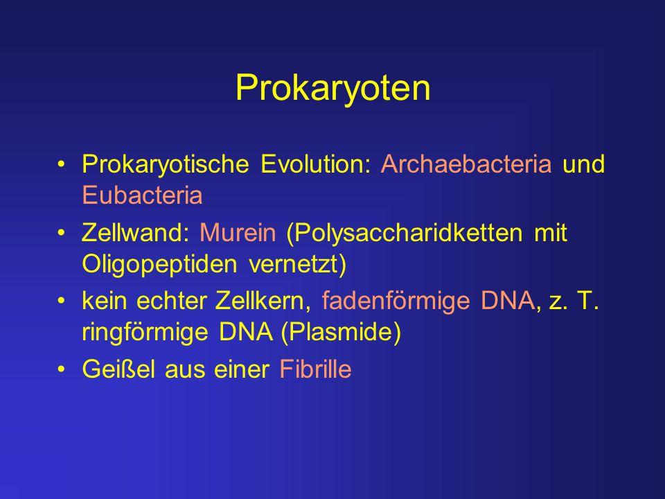 Prokaryoten Prokaryotische Evolution: Archaebacteria und Eubacteria