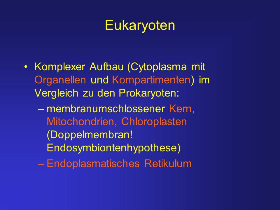 Eukaryoten Komplexer Aufbau (Cytoplasma mit Organellen und Kompartimenten) im Vergleich zu den Prokaryoten: