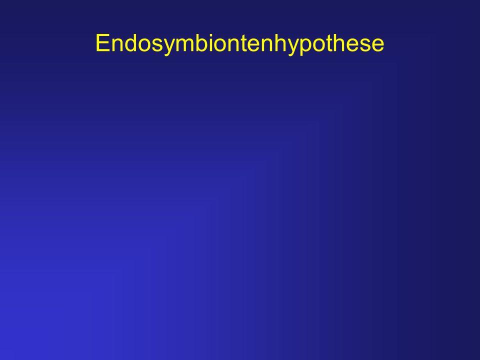 Endosymbiontenhypothese