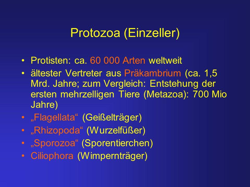 Protozoa (Einzeller) Protisten: ca. 60 000 Arten weltweit
