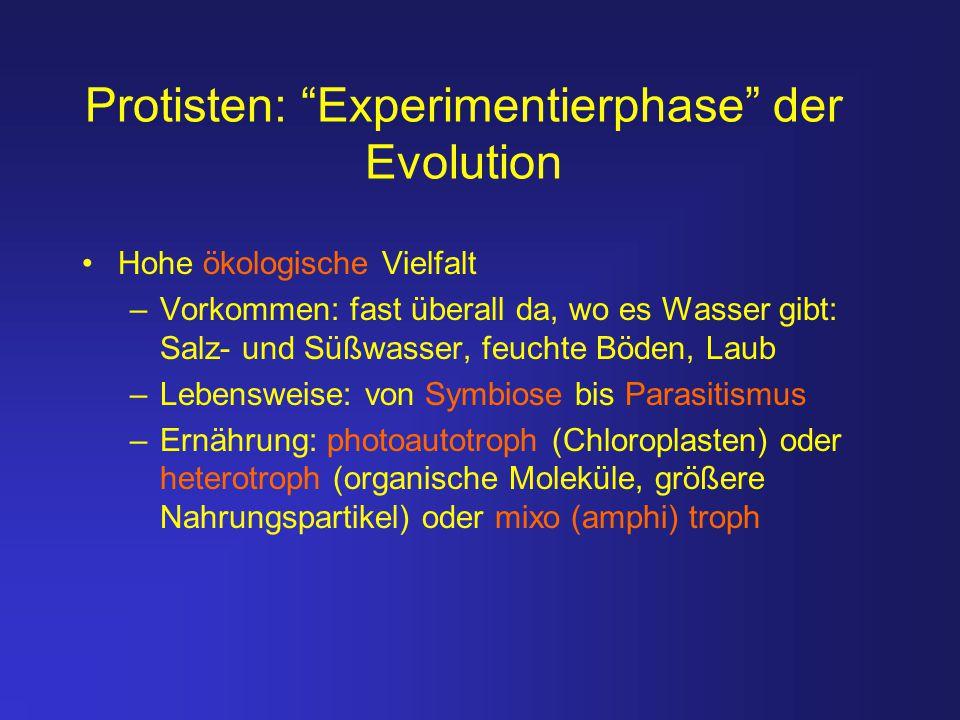 Protisten: Experimentierphase der Evolution