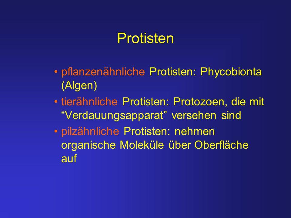 Protisten pflanzenähnliche Protisten: Phycobionta (Algen)