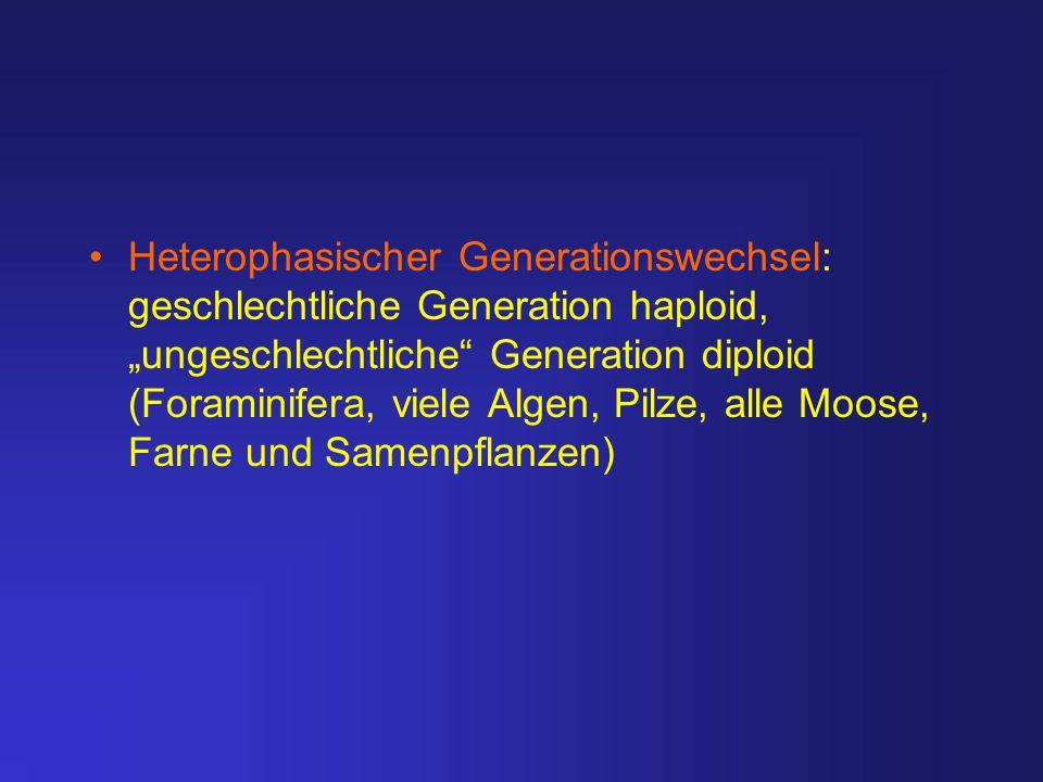 """Heterophasischer Generationswechsel: geschlechtliche Generation haploid, """"ungeschlechtliche Generation diploid (Foraminifera, viele Algen, Pilze, alle Moose, Farne und Samenpflanzen)"""
