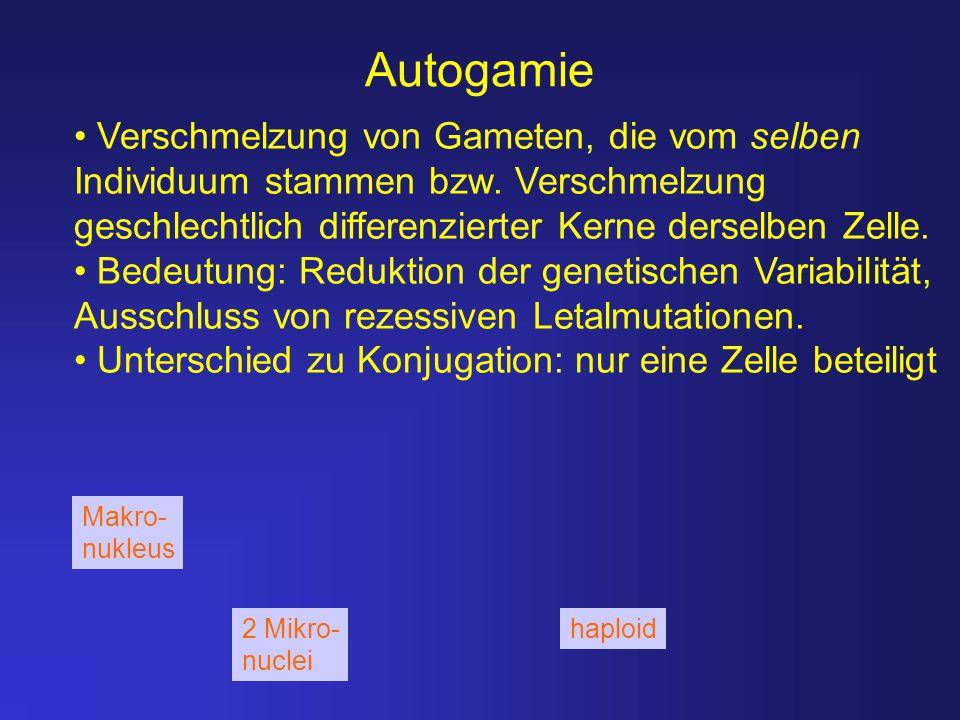 Autogamie Verschmelzung von Gameten, die vom selben Individuum stammen bzw. Verschmelzung geschlechtlich differenzierter Kerne derselben Zelle.