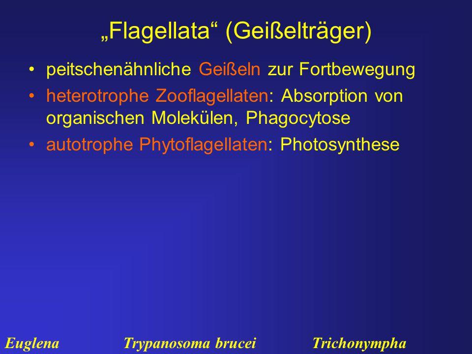 """""""Flagellata (Geißelträger)"""
